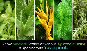 Medicinal Benefits of ayurvedic species such as Withania Somnifera, Musli, Neem, Asparagus